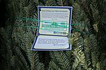 Trees for Troops spreads Christmas cheer at Cherry Point 141211-M-SR938-062.jpg