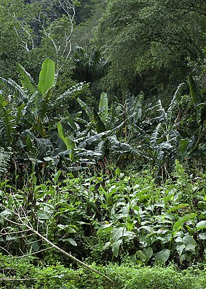 Tropical vegetation - Typical Caribbean vegetation in Cuba.