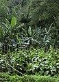 Tropical vegetation.jpg