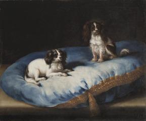 Två mindre hundar