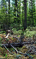 Twin Lakes Bog State Natural Area 2.jpg