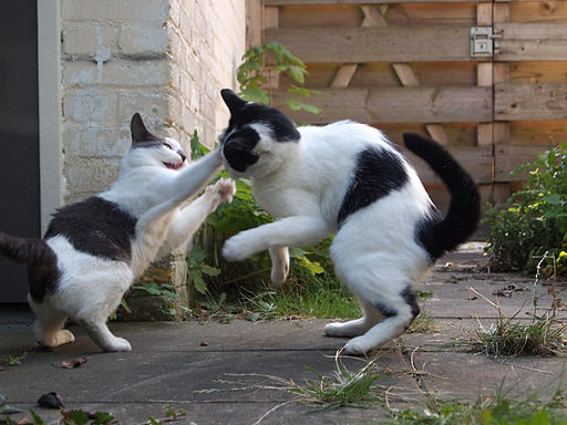 Two cats jump to playfight