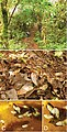 Type locality of Carychium panamaense (10.3897-zookeys.795.29339) Figure 6.jpg