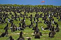 US Navy 100602-N-7498L-021 More than a million Laysan Albatrosses occupy the entire Midway atoll.jpg