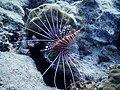 Under Water Life.jpg