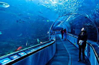 Aquarium of the Bay - A moving walkway (on the right) and stationary platform take visitors through the signature attraction, a long acrylic underwater tunnel.