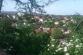 Varos Irig - panoramio (1).jpg