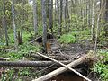 Vecdorvalks, Dundagas pagasts, Dundagas novads, Latvia - panoramio (1).jpg