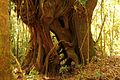 Vegetacion de Bosque Tropical en Costa Rica 011.jpg