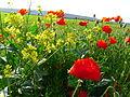 Vergeflowers and greenhouse.JPG