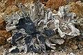 Victim of Erosion - geograph.org.uk - 161474.jpg