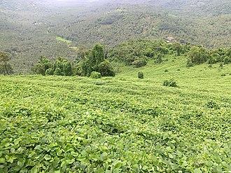 Nediyiruppu - Image: View of Arimbra mala through old rubber plantation of Late Chakeeri Kunhami Umma 1
