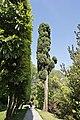 Villa Carlotta il giardino vecchio.jpg