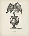 Vintage illustrations by Benjamin Fawcett for Shirley Hibberd digitally enhanced by rawpixel 102.jpg