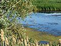 Volgodonsk, Rostov Oblast, Russia - panoramio (45).jpg