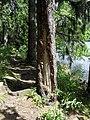 Vylet k Cernemu jezeru Sumava - 9.srpna 2010 207.JPG