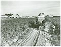 Wagon load of cotton coming out of the field in the evening,... (3109742247).jpg
