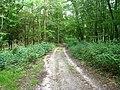 Waldweg bei Holm - geo.hlipp.de - 23966.jpg