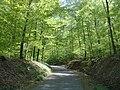 Waldweg zur Krugeiche - geo.hlipp.de - 24709.jpg