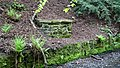 Wallace's Well, Pittencrieff Glen, Dunfermline - view from upstream.jpg