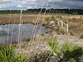 Wareham Forest Walk - Decoy Heath - geograph.org.uk - 1540016.jpg