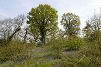 Welsh Wood 9.JPG