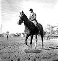 Werner Haberkorn - Prática de equitação 11.jpg