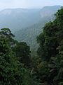 Western Ghats Vegetation - View en route Kottiyoor to Mananthavady9.jpg