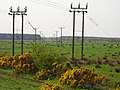 Wet ground and power lines - geograph.org.uk - 167055.jpg