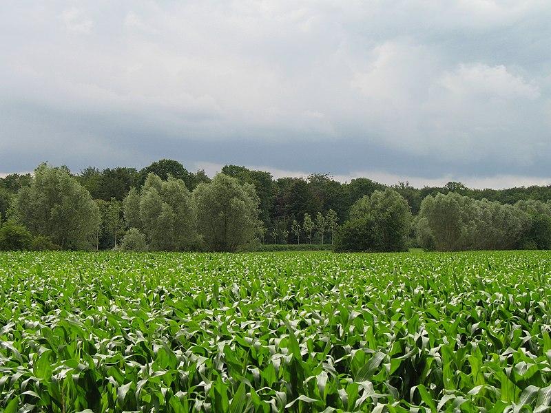 Torhout (Province of West Flanders, Belgium): Wijnendale Wood