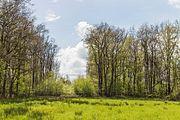 Wijnjeterper Schar, Natura 2000-gebied provincie Friesland 23.jpg