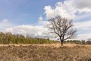 Wijnjeterper Schar, Natura 2000-gebied provincie Friesland 24.jpg