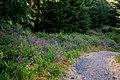 Wild Flowers (3736474674).jpg