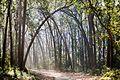 Wilderness,Corbett National Park.jpg