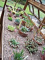 Winterbourne - Alpine House (5987482050).jpg
