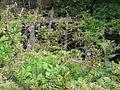 WisteriaTeahouse Trellis for wisteria.JPG