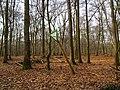 Wolbecker Tiergarten (9).JPG