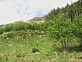 Woodland near Loch Frisa - geograph.org.uk - 448703.jpg