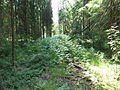 Woodlot NW of Kornilovo - whortleberries - DSCF5604.JPG