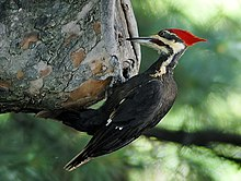 Woodpecker 20040529 151837 1c cropped.JPG
