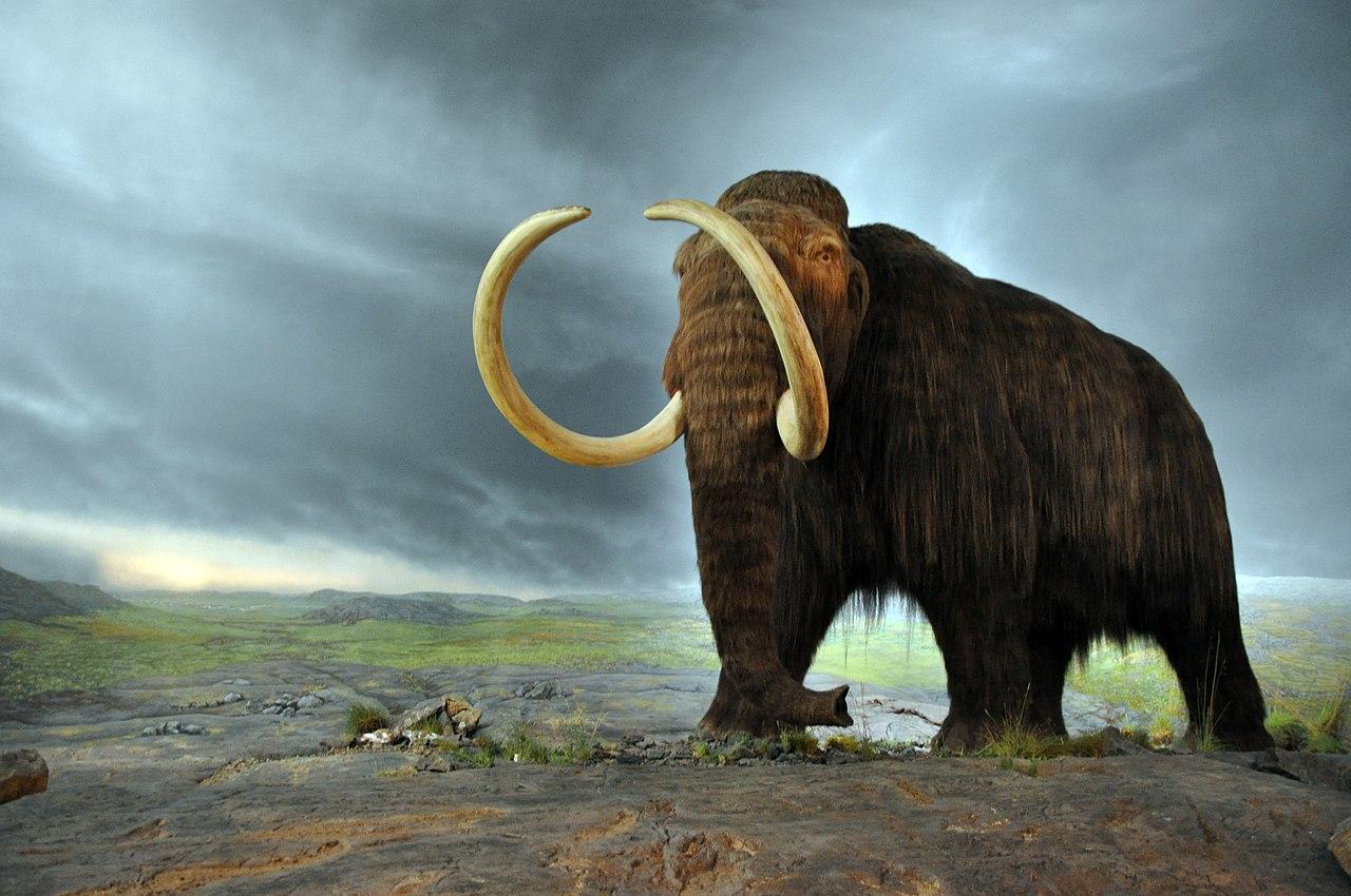 Reconstitution d'un Mammouth laineux sur fond de ciel orageux.