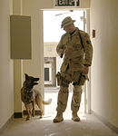 Working Dogs Get Training DVIDS25737.jpg