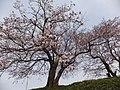 Yatsuomachi Nishijinzu, Toyama, Toyama Prefecture 939-2311, Japan - panoramio (1).jpg