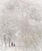 Yeovil- Whiteout in Ninesprings.jpg