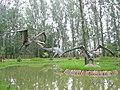 Zaurolandia, Rogowo, Poland (zaurolandia.pl) - panoramio (3).jpg