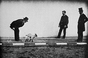 Georges Demenÿ - Image: Zicklein einer physiologischen Studie unterzogen; links Marey, rechts, ohne Hut, Demeny