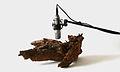 Zimoun woodwoorms 800px.jpg