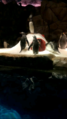 """PENGUIN ARE CHILLIN '.png"