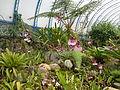 (Jardín Botánico de Quito) pic b02.JPG