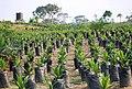 ^Liberia ^WestAfrica 2015 - panoramio (1).jpg